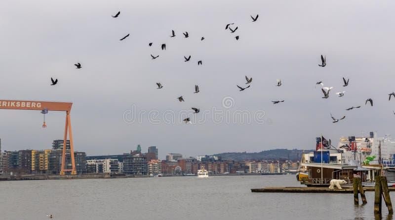 Rebanho dos pássaros sobre a Suécia de Göteborg da skyline da cidade fotografia de stock royalty free