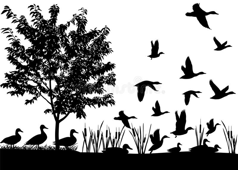 Rebanho dos patos ilustração royalty free