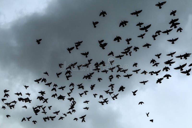 Rebanho dos pombos altos no céu fotografia de stock royalty free