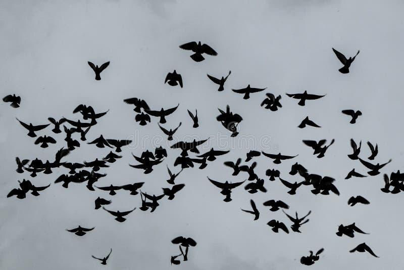 Rebanho dos pombos altos no céu foto de stock