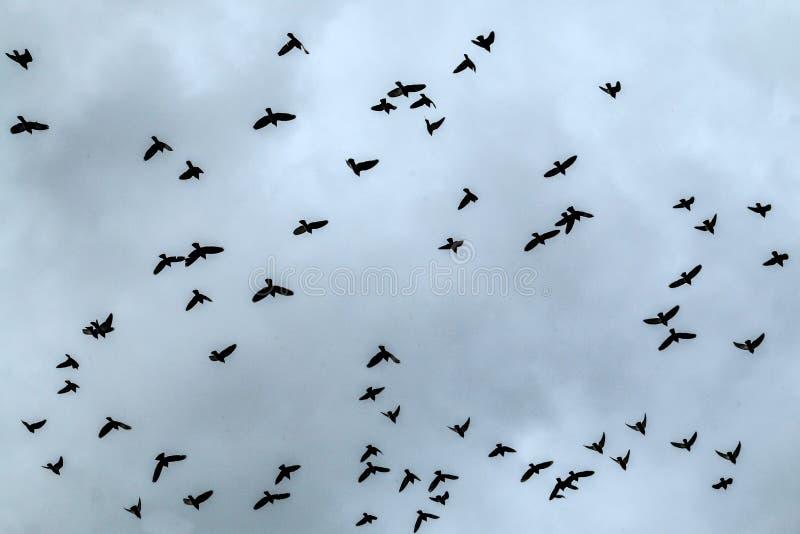 Rebanho dos pombos altos no céu fotografia de stock
