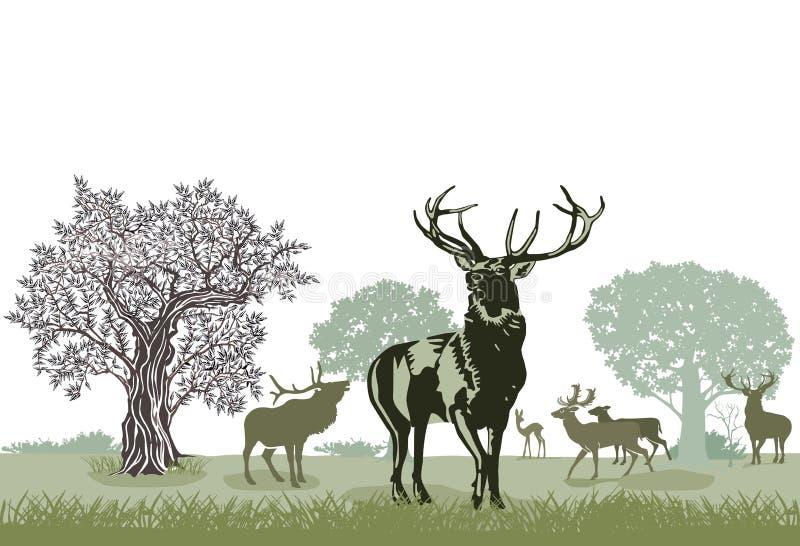 Rebanho dos veados vermelhos ilustração royalty free
