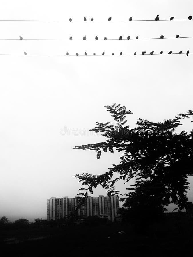 Rebanhos da cidade dos pássaros- imagem de stock