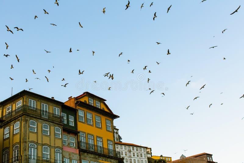 Rebanhos das gaivotas sobre os telhados da cidade velha fotos de stock
