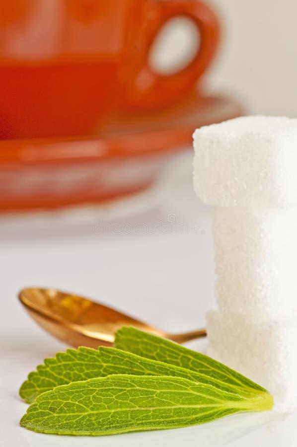 rebaudiana甜叶菊糖技术支持 图库摄影