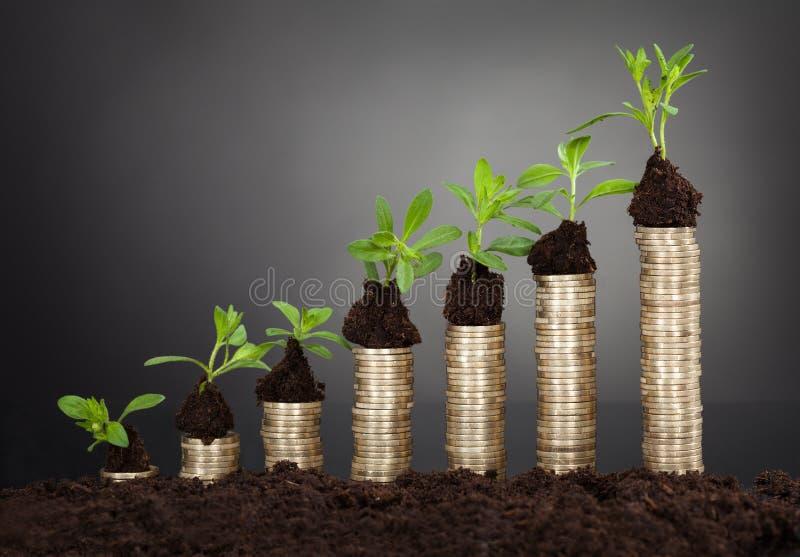 Rebentos na pilha de moedas que representam o crescimento imagens de stock