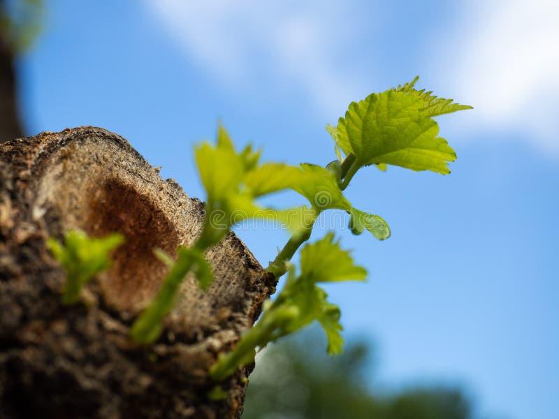 Rebentos Da árvore Na Terra Imagem de Stock - Imagem de prado ...