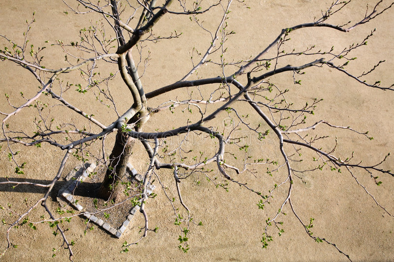 Download Rebirth of a tree stock image. Image of branch, renewal - 4984913