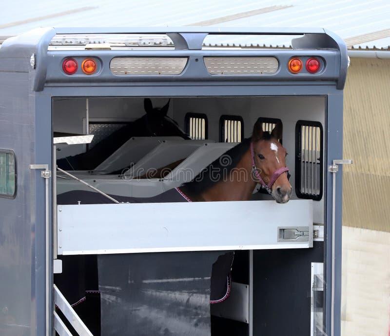 Reboque do cavalo estacionado perto da pista fotos de stock