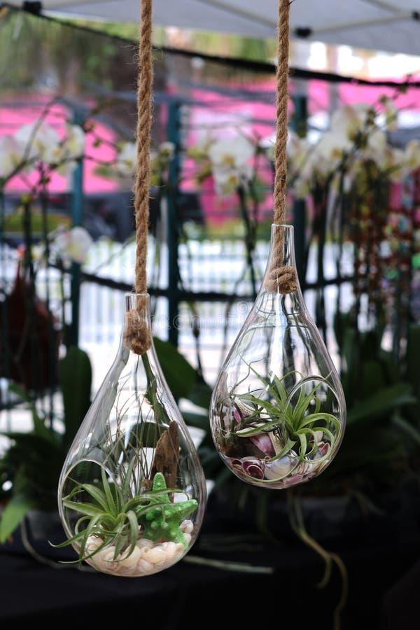 Reboque o vidro decorativo do formulário do vaso com as plantas verdes como o ramalhete na loja pequena para a venda no mercado d foto de stock royalty free