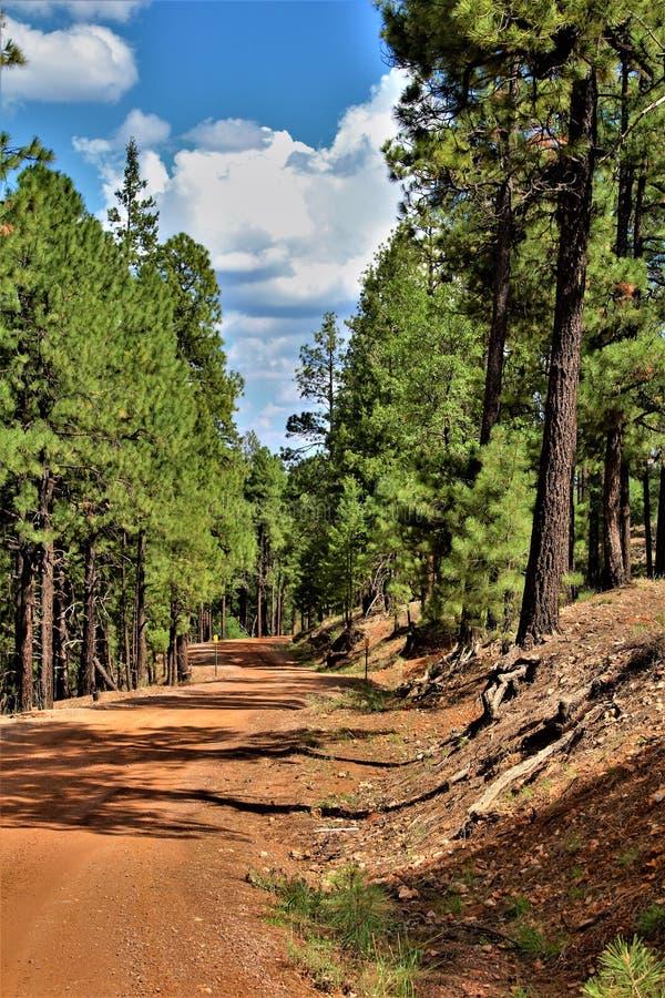 Rebrota 2002 do fogo do rodeio-Chediski da floresta nacional de Apache Sitgreaves 2018, o Arizona, Estados Unidos imagem de stock