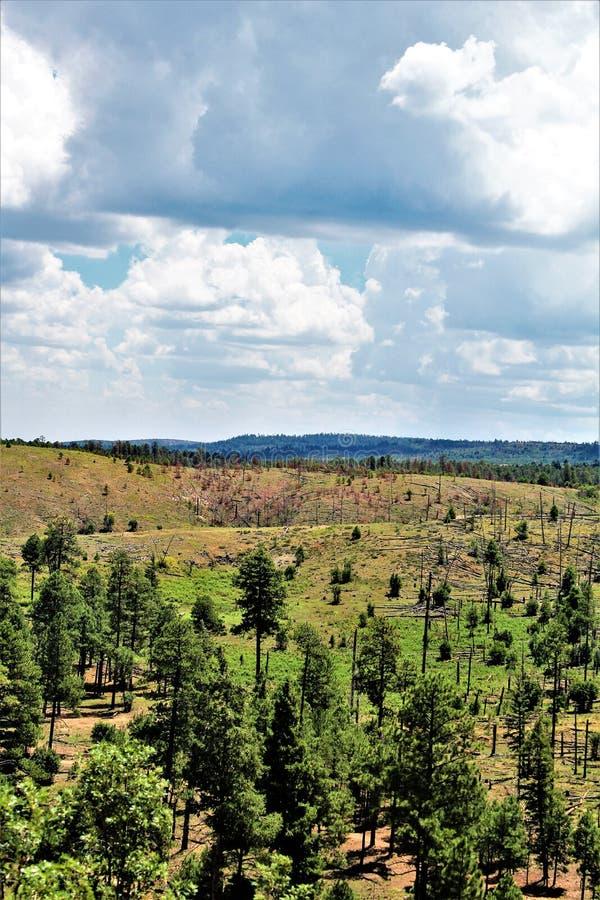 Rebrota 2002 do fogo do rodeio-Chediski da floresta nacional de Apache Sitgreaves 2018, o Arizona, Estados Unidos foto de stock royalty free