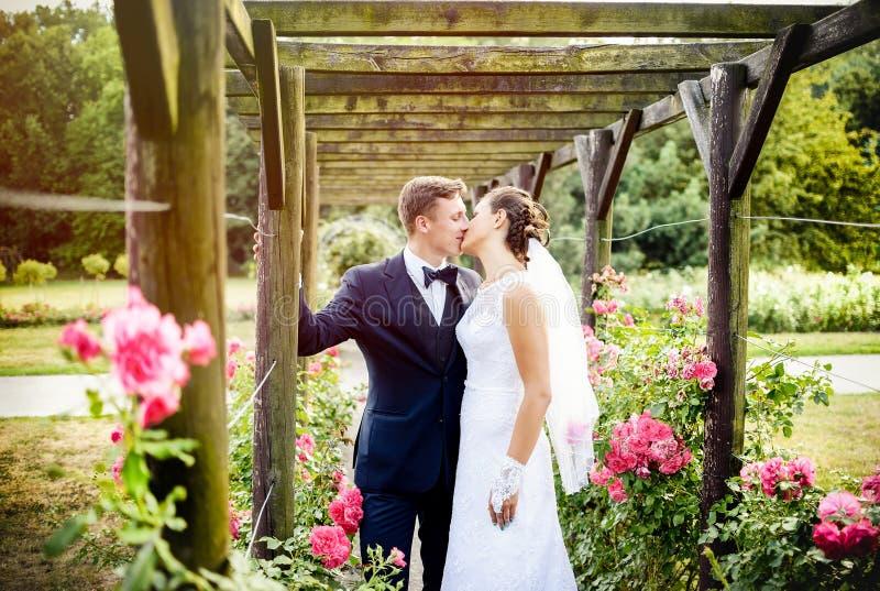 Recém-casados no rosarium do parque ao lado das rosas cor-de-rosa bonitas fotos de stock