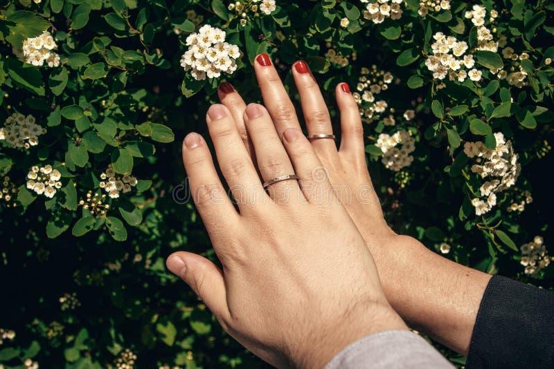 Recém-casados que guardam as mãos com alianças de casamento de prata à moda no bea fotografia de stock royalty free