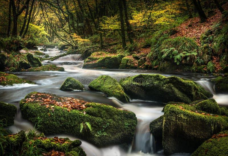 Recent Autumn Moss, Golitha-Dalingen, Cornwall royalty-vrije stock afbeeldingen