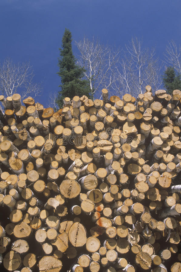 Recently cut logs awaiting processing royalty free stock images