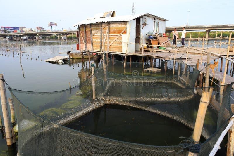 Recherche commune de Fisher en aquiculture photos stock