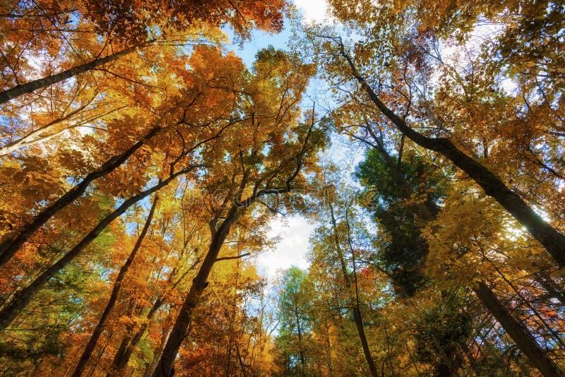 Recherche dans une forêt de couleurs d'automne photographie stock libre de droits