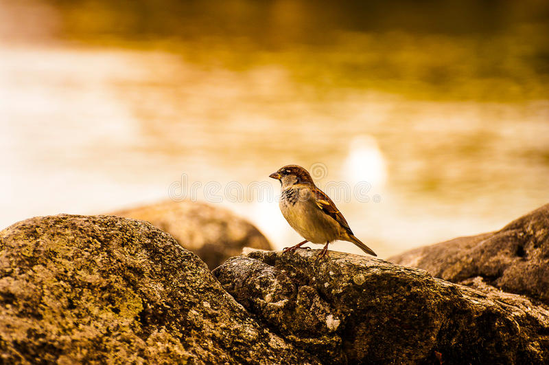 Recherche de birdie photos libres de droits