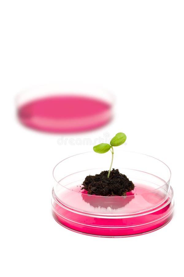 Recherche en matière de biotechnologie photos libres de droits