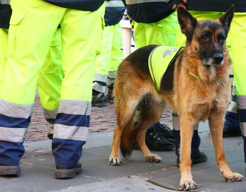 Recherche und Rettungs-Hund lizenzfreies stockfoto