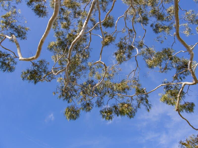 Recherchez à un arbre avec le ciel bleu images libres de droits