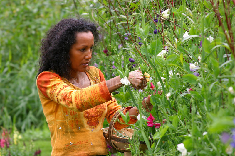 Recht dunkle Frauensammelnblumen stockfoto