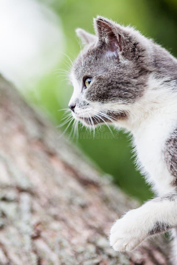 Recht graue und wei?e Katze lizenzfreies stockfoto