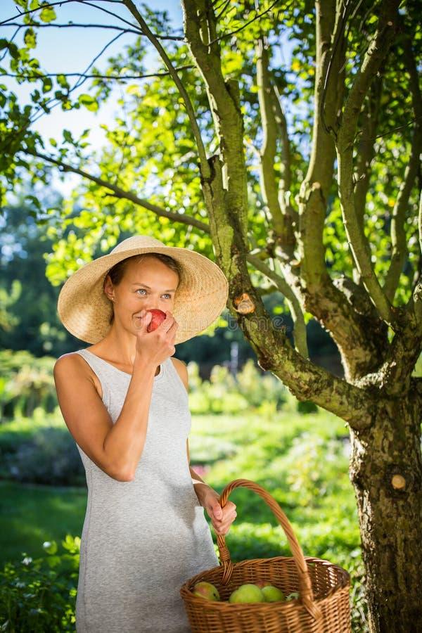 Recht junge Frau, die in ihrem Garten - Ernten von organischen Äpfeln im Garten arbeitet lizenzfreie stockbilder