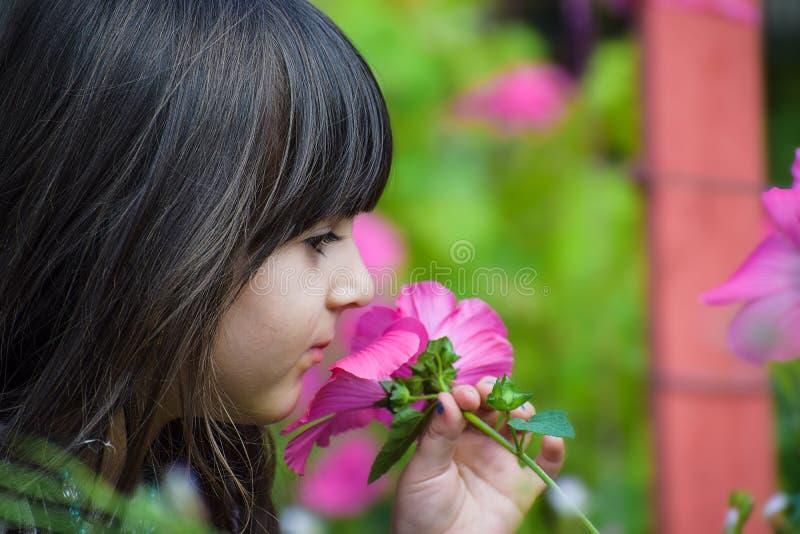 Recht kleines Kindmädchenkinderhaltene und riechende Blume im Garten, Spaß mit rosa Blume in einem schönen klaren habend stockbilder