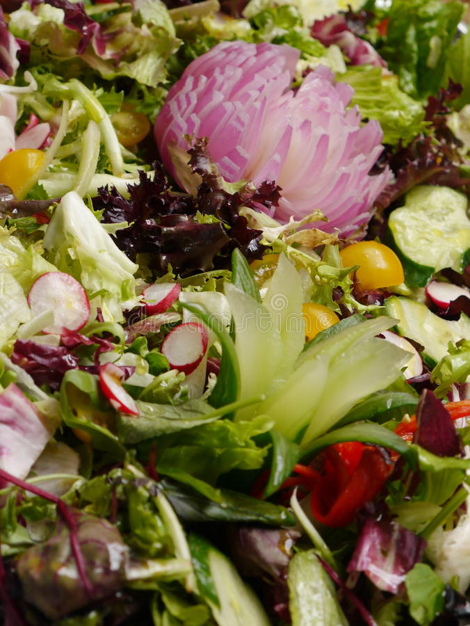 Recht ordentlicher Salat lizenzfreie stockfotos