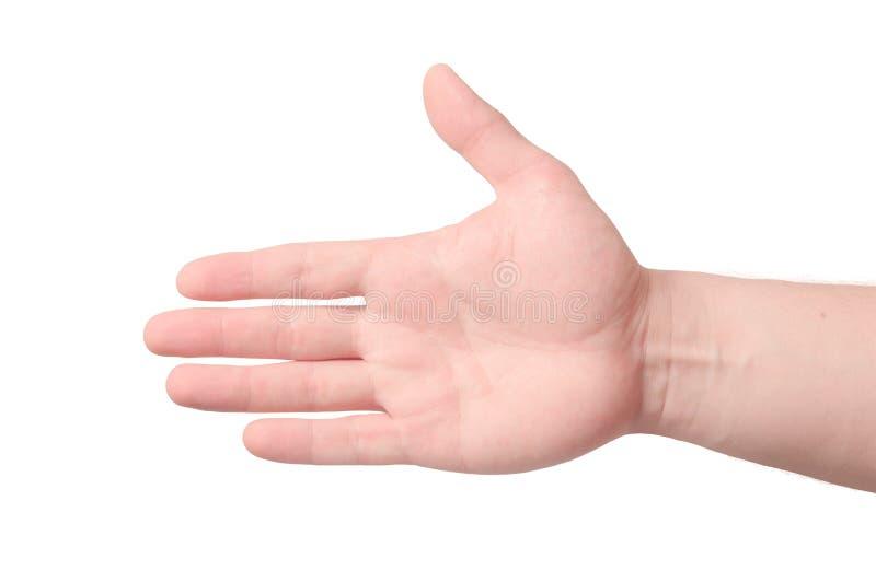 Rechte Palmenhand Getrennt auf weißem Hintergrund stockfotos