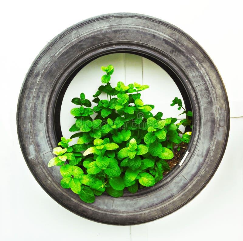 Recicle del neumático usado en verdura orgánica foto de archivo