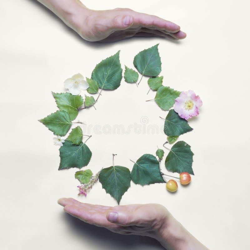 Recicle el concepto Manos Lugar para una inscripción, presentado de hojas y de flores verdes El fondo es blanco c?rculo fotografía de archivo