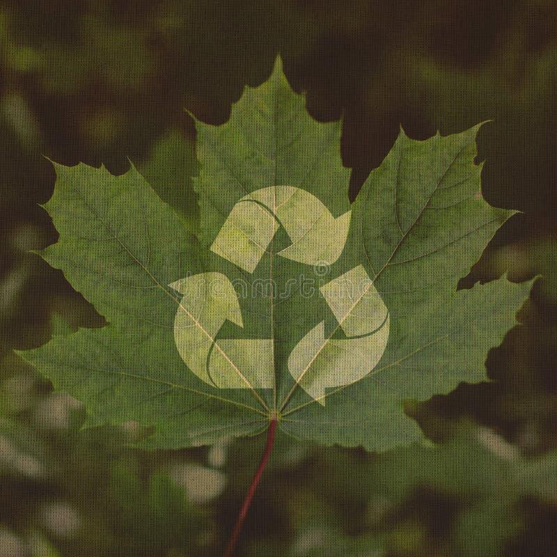 Download Recicle El Símbolo En Un Fondo De La Hoja Verde Imagen de archivo - Imagen de recicle, canadiense: 41913423