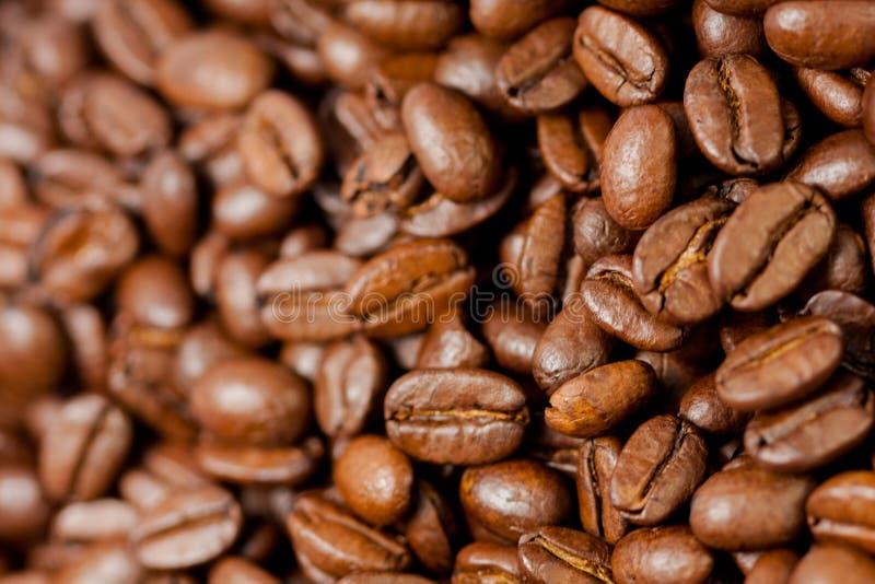 Recientemente molido habas del café asadas con las frutas de la planta del café, llenas de granos fotos de archivo libres de regalías