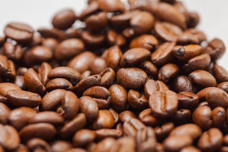 Recientemente molido habas del caf? asadas con las frutas de la planta del caf?, en el fondo blanco imagen de archivo libre de regalías
