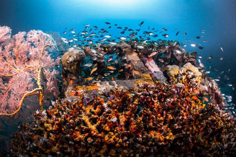Recife com peixes imagem de stock royalty free