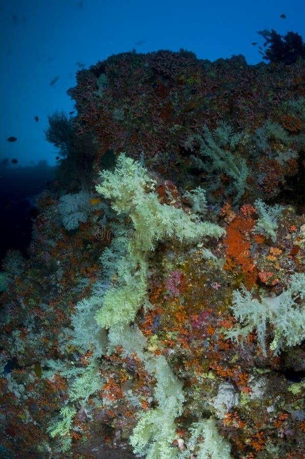 Recife, corais macios coloridos, Maldives imagens de stock
