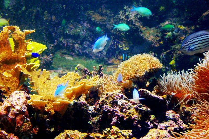 Recife coral foto de stock