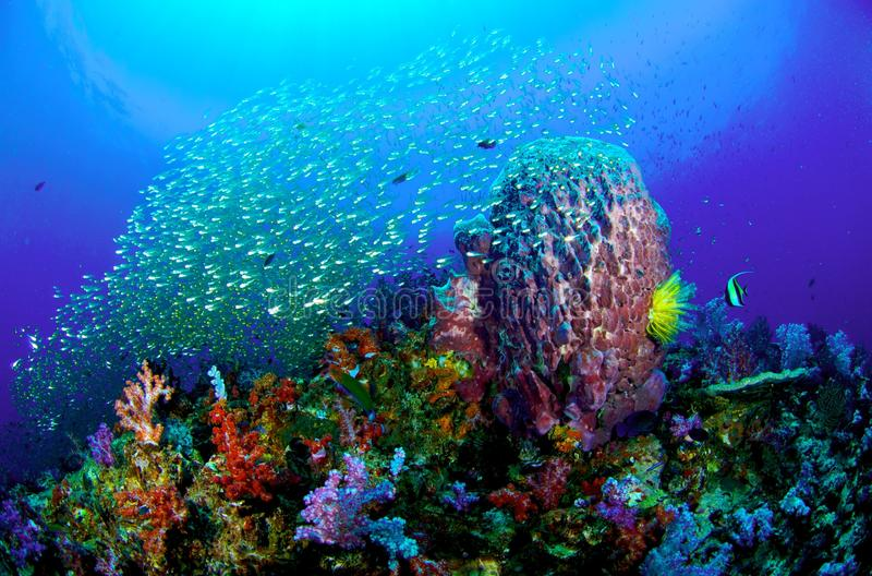Recife coral colorido foto de stock