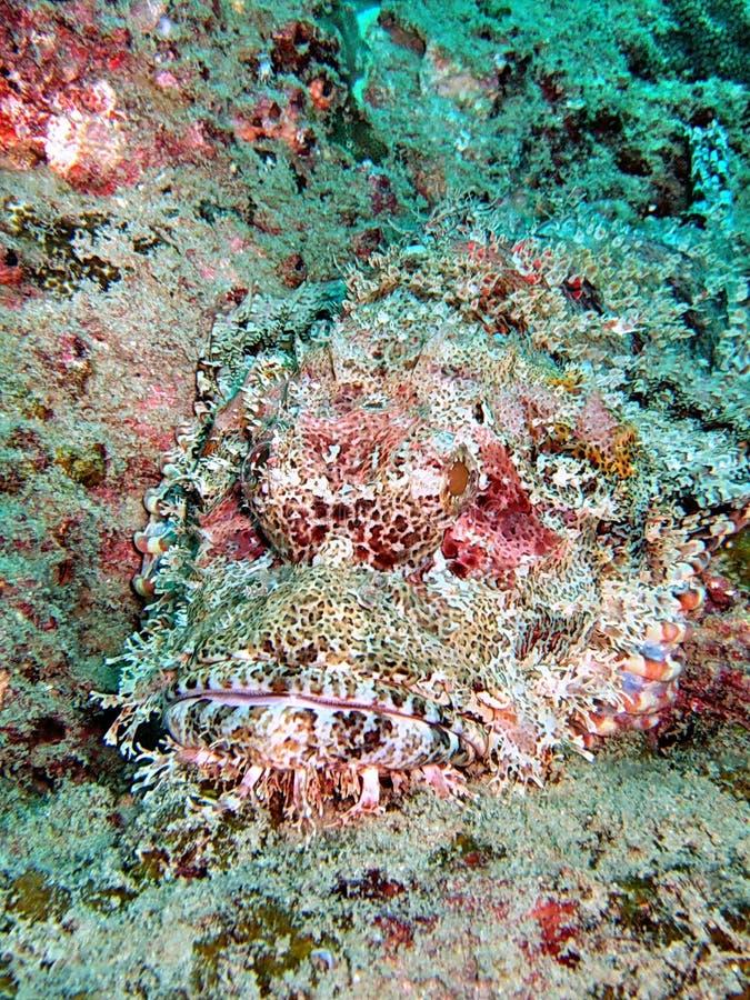 Recife coral colorido imagem de stock