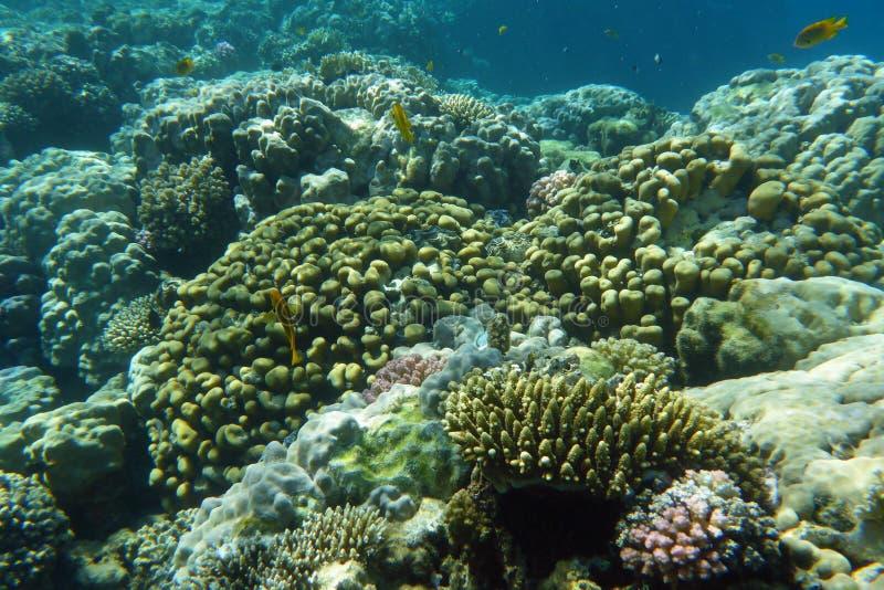 Recife coral colorido com peixes fotos de stock royalty free
