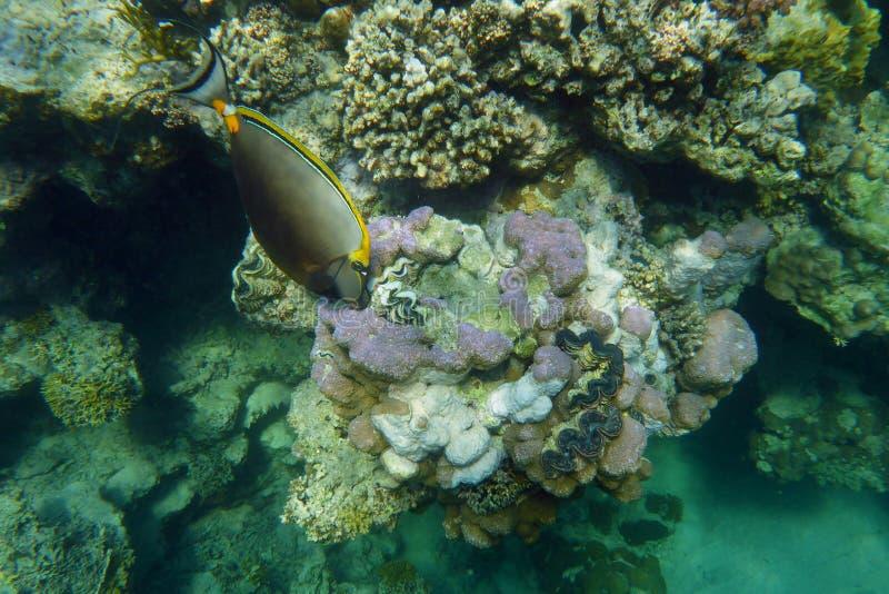 Recife coral colorido com peixes fotografia de stock