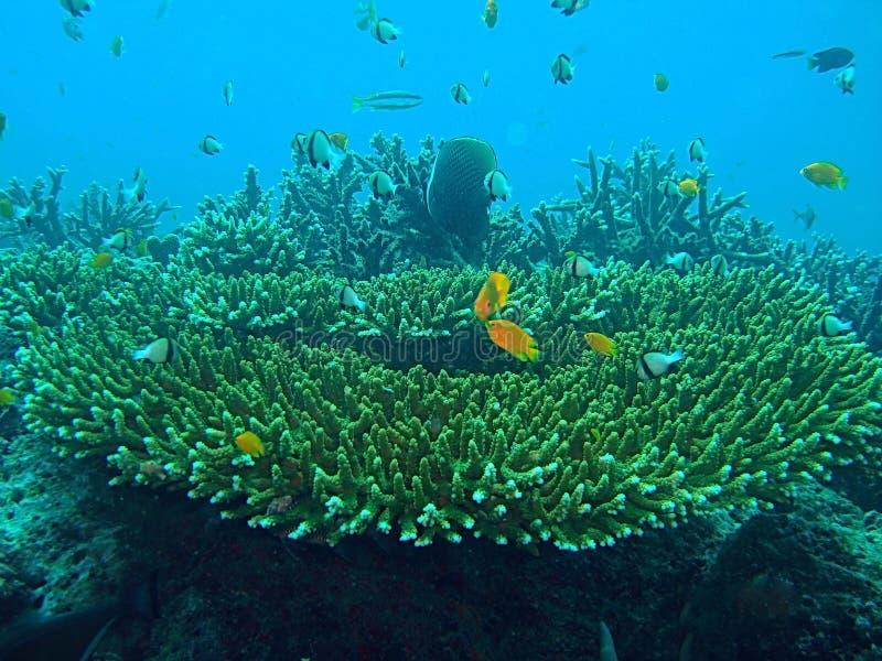 Recife coral com peixes fotografia de stock royalty free