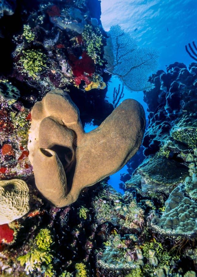 Recife coral do Cararibe fotos de stock