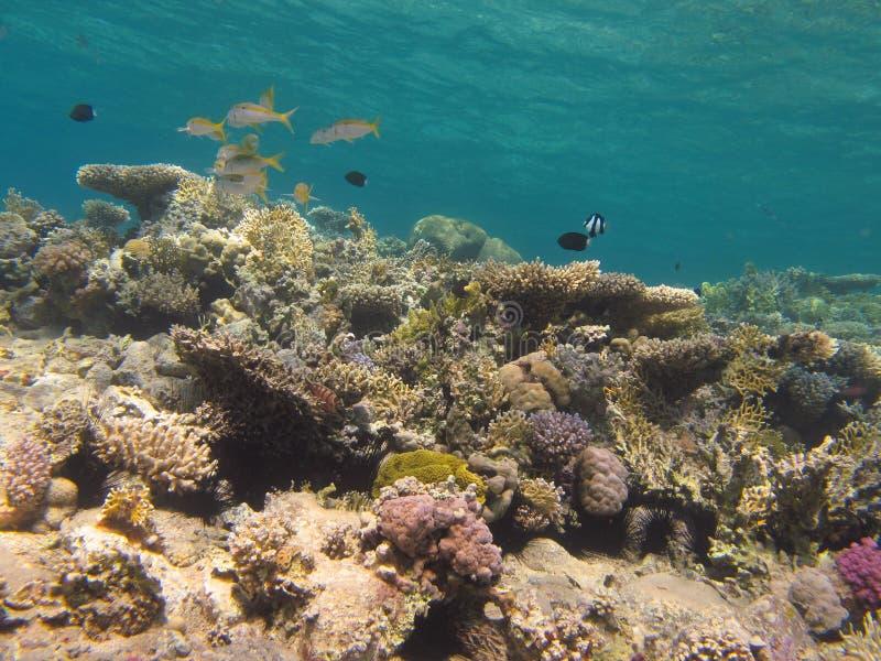 Recife coral e água azul do espaço livre fotografia de stock