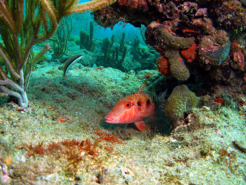 Recife coral e peixes foto de stock