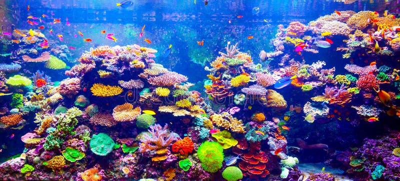 Recife coral e peixes tropicais foto de stock royalty free