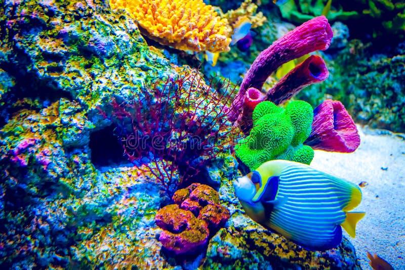 Recife coral e peixes tropicais